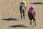 November 3, 2018: City of Light #1, ridden by Javier Castellano, wins the Breeders' Cup Dirt Mile on Breeders' Cup World Championship Saturday at Churchill Downs on November 3, 2018 in Louisville, Kentucky. Carolyn Simancik/Eclipse Sportswire/CSM