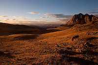 A horse grazes in the Peruvian Andes.