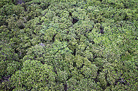 Aerial view of the mangroves of Zhanjiang, Guangdong Province. Over the past century, the world has lost over 50% of its coastal mangroves. They have been cleared mainly to make way for commercial shrimp and fish farms. The unique trees which live in salt water are valued for the ability to protect shorelines and are home to a diverse array of flora and fauna. 2010