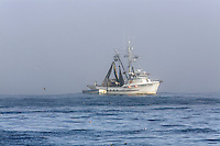 Fishing boats haul in their catch in Monterey Bay, California.