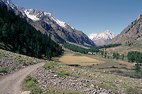 A mountain valley near Gilgit has an Alpine feel to it, with meadows and fir trees on the lower slopes and snow-clad peaks in the background.