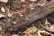 Artifact (possibly the remnants of a Parker Young harness used on horses) at logging Camp 5 in Waterville Valley, New Hampshire. This camp was a logging camp located along the Mad River. From 1891-1946 +/-, this area was logged, and up until 1933 log drives were done on the Mad River to move logs down to Campton Pond. The removal of historic artifacts from federal lands without a permit is a violation of federal law.