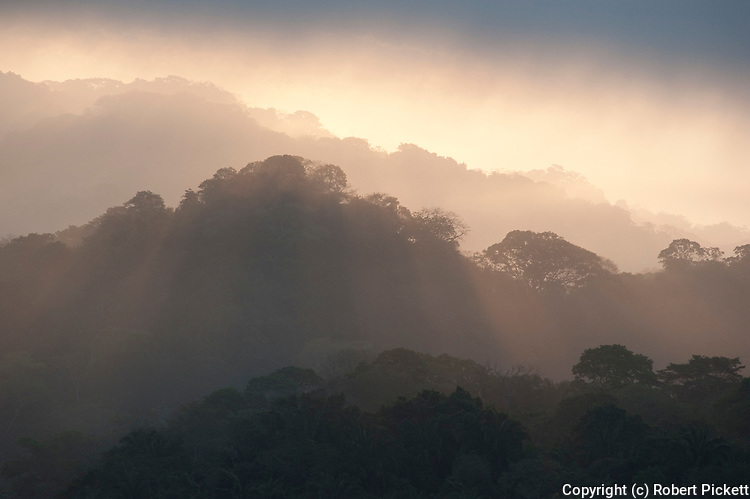 Sunrise View over Jungle Canopy, Panama, Central America, Gamboa Reserve, Parque Nacional Soberania, sunbeams through clouds