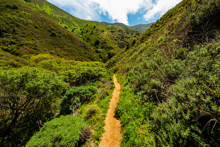 Hiking trail, Garrapata State Park, Monterey County, California USA