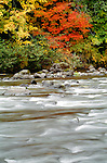 Quinault River, Olympic National Park, Washington
