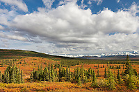 Autumn colors over the tundra and taiga landscape of Denali National Park, Alaska Range mountains in the distance, Interior, Alaska.