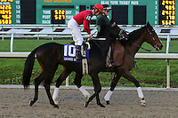 January 17, 2015: at the New Orleans Fairgrounds course. Steve Dalmado/ESW/CSM