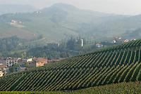- Langhe hills, vineyards panorama <br /> <br /> - colline delle Langhe, panorama di vigneti <br /> - Langhe hills, vineyards panorama <br /> <br /> - colline delle Langhe, panorama di vigneti