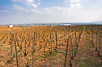 On top of the hill with a view over the Rhone Valley and river. The Maison Blanche vineyard. The Hermitage vineyards on the hill behind the city Tain-l'Hermitage, on the steep sloping hill, stone terraced. Sometimes spelled Ermitage. Tain l'Hermitage, Drome, Drôme, France, Europe