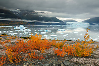 Fall landscape of ice bergs in Inner Lake George at Colony Glacier and fog along Chugach Moutains with yellow and red willows and mountain dryas.  Alaska<br /> <br /> Photo by Jeff Schultz/SchultzPhoto.com  (C) 2018  ALL RIGHTS RESERVED<br /> <br /> 2018 Bears, Glaciers and Fall Colors Photo tour/workshop