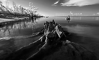 The Everglades National Park photographed in Infrared. Photo/Andrew Shurtleff Photography, LLC