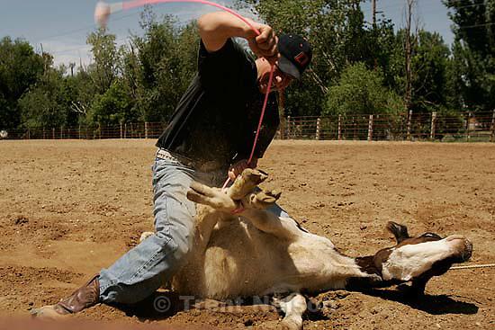 Clint Robinson, calf-roper<br />