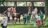 Country Sunshine before The White Clay Creek Stakes at Delaware Park on 7/25/13