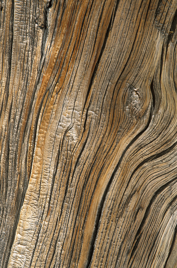 wood patterns in western larch