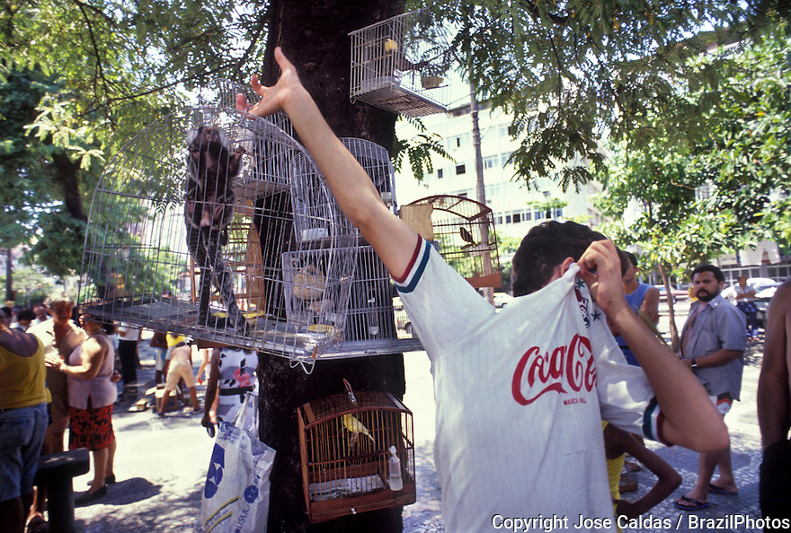 Illegal trade of animals. Rio de Janeiro, Brazil. monkey and birds in cage for sale at open-air market.