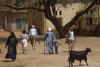 Afrique/Egypte/Abydos: Scène de vie au village