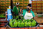 Local cooperative called COOPPROBATA selects organic banana for exporting to Europe and US