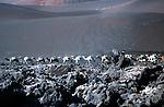 dromedaries in the Timanfaya National Park, Lanzarote, Canary Islands<br /> <br /> dromedarios en el Parque Nacional de Timanfaya, Lanzarote, Islas Canarias<br /> <br /> Dromedare im Nationalpark Timanfaya auf Lanzarote, Kanarische Inseln<br /> <br /> 3777 x 2470 px<br /> Original: 35 mm slide transparency