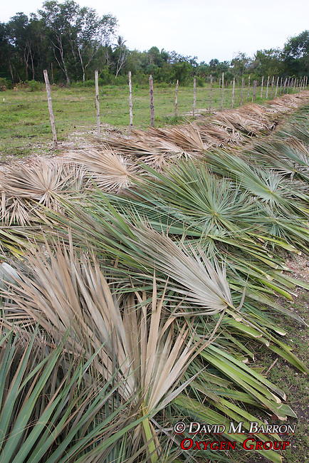 Harvested Grasses