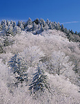 Mountain top with snow covered trees, Newfound Gap, Great Smoky Mountains National Park, Tennessee, USA.