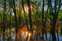 Sunrise on the Seine River. Seine River Forest.<br /> Winnipeg<br /> Manitoba<br /> Canada