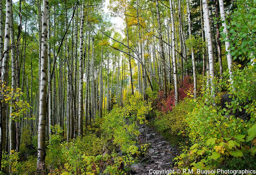 Trail near Maroon Bells