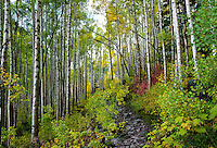 Trail near Maroon Bells