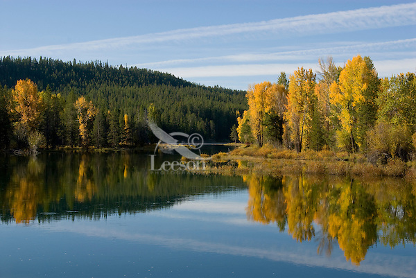 Fall color (mostly cottonwoods) along Snake River, Grand Teton National Park, WY.  Sept.