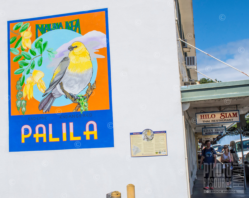 The endangered native palila depicted on the side of a building in Hilo, Big Island of Hawai'i.