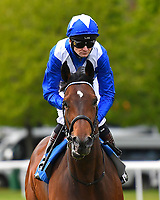 Humanitarian ridden by Robert Havlin goes down to the start of The Penang Turf Club Malaysia Novice Stakes   during Afternoon Racing at Salisbury Racecourse on 16th May 2019