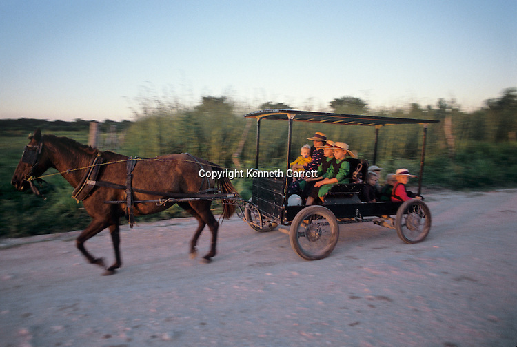 Mennonite farmer with family; horse and buggy; traditional; agriculture; Daily life; Belize; farming, children