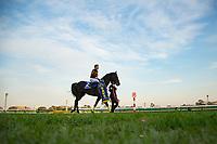 FUNABASHI,JAPAN-DECEMBER 24: Kitasan Black,ridden by Yutaka Take, after winning the Arima Kinen at Nakayama Racecourse on December 24,2017 in Funabashi,Chiba,Japan (Photo by Kaz Ishida/Eclipse Sportswire/Getty Images)