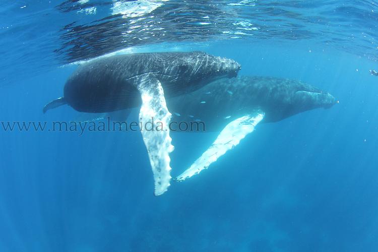 Humpback_Whales_MomCalf