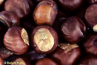 SE17-001z  Horse Chestnut seeds