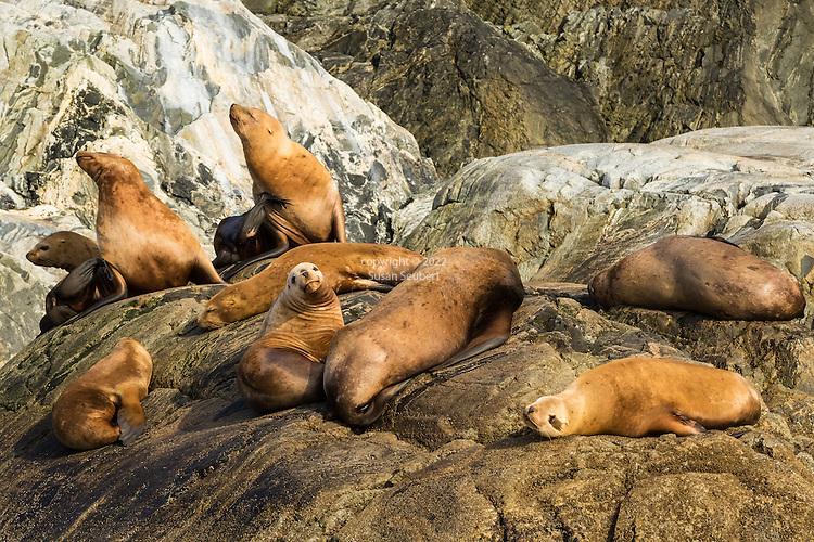 Inian Islands, Alaska, USA