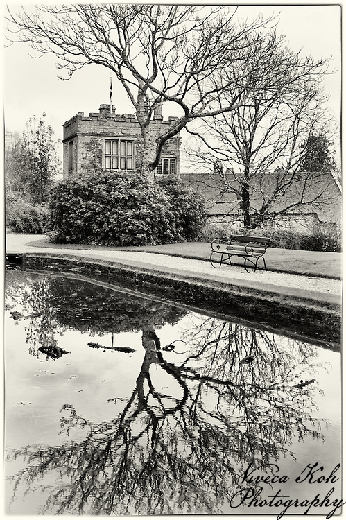 Tree reflected in the water at Cotehele