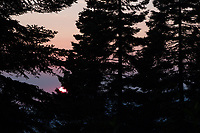 The sun sets behind trees in Sequoia Crest.