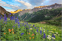 Yankee Boy Basin is one of the iconic locations to shoot Wildflower images in Colorado. The landscapes available among these San Juan mountains are breathtaking, especially in July and August. <br />