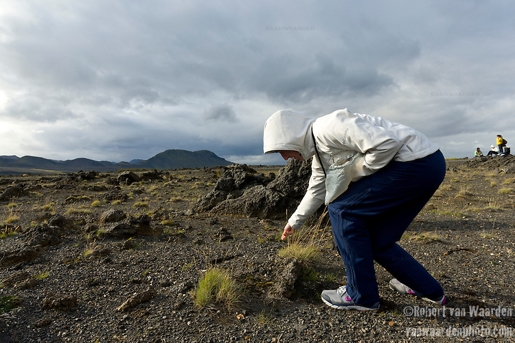 A student on the Cape Farewell Youth expedition sows the seeds of birch in the Iceland landscape. The Iceland landscape is eroding at an alarming rate and by planting trees, the authorities hope to stem this erosion. The expedition was organized by the British Council of Canada.