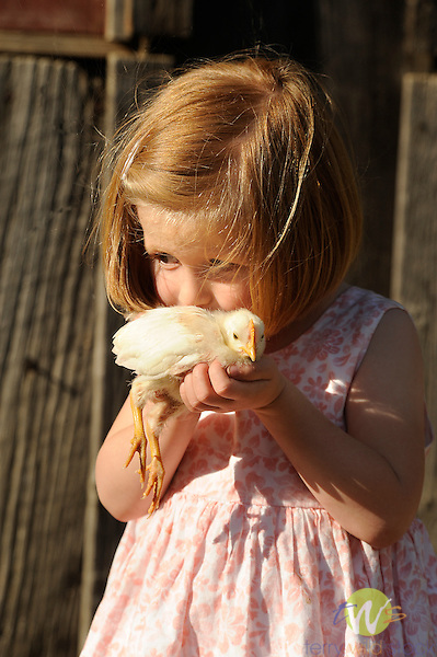 Walnut Run Farm. Madeline Boerckel (age 3) with baby chick. Poulet.