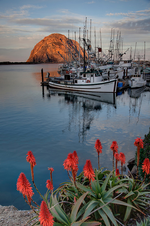 Spring bloom on the embarcadero- Morro Bay, Central California Coast