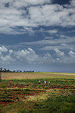 MAURITIUS, field workers walk through the open landscape outside of the capital city of Port Louis