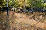 Autumn 2012:  The Never Summer Range, Colorado.
