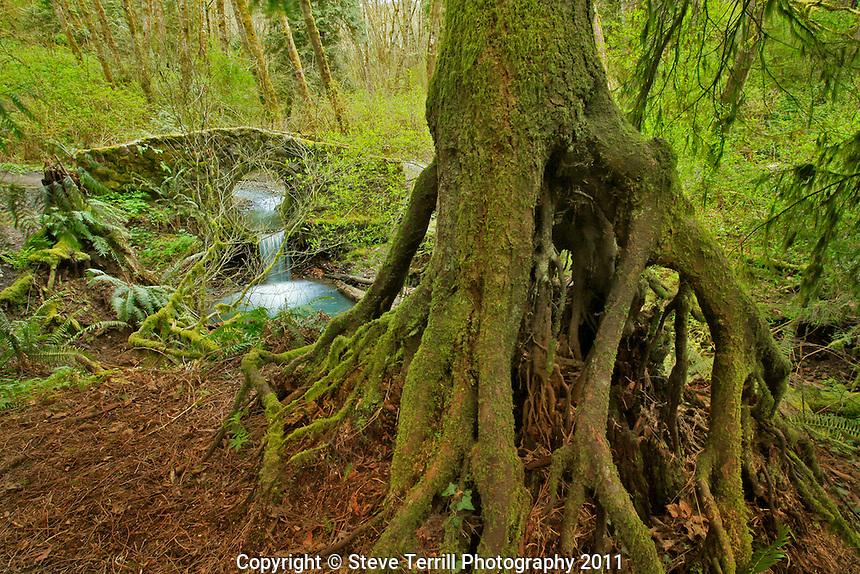 Stone bridge in Tryon Creek State Park Portland, Oregon
