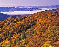 Autumn colors along Thomas Divide, Great Smoky Mountains National Park, North Carolina.