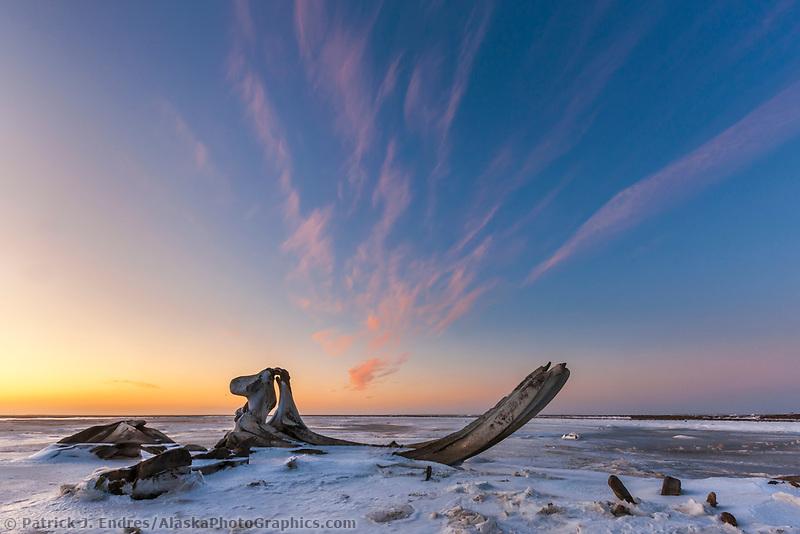 Bowhead whale bones along the shore of Barter Island, Beaufort Sea, Arctic, Alaska.