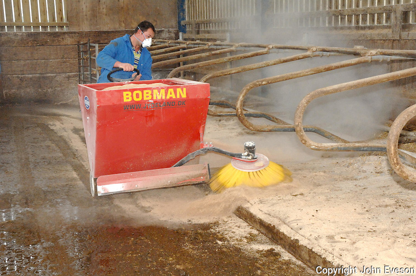 Sweeping sawdust and muck from the back of cow cubicles and bedding with fresh sawdust.