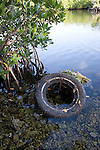 Discarded automobile tire among Red Mangrove prop roots, Florida State Park land, Key Largo,