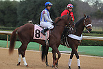 January 18, 2016: #8 Synchrony during the post parade before the running of the Smarty Jones Stakes at Oaklawn Park in Hot Springs, AR. Justin Manning/ESW/CSM