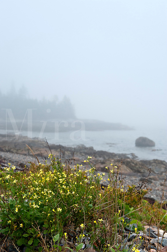 Misty coastline, Bernard, Maine, USA